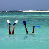 Flippers in the Indian Ocean