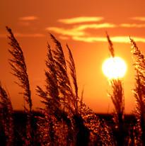 Sunset rush