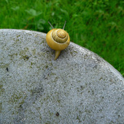 Snail looking over the edge