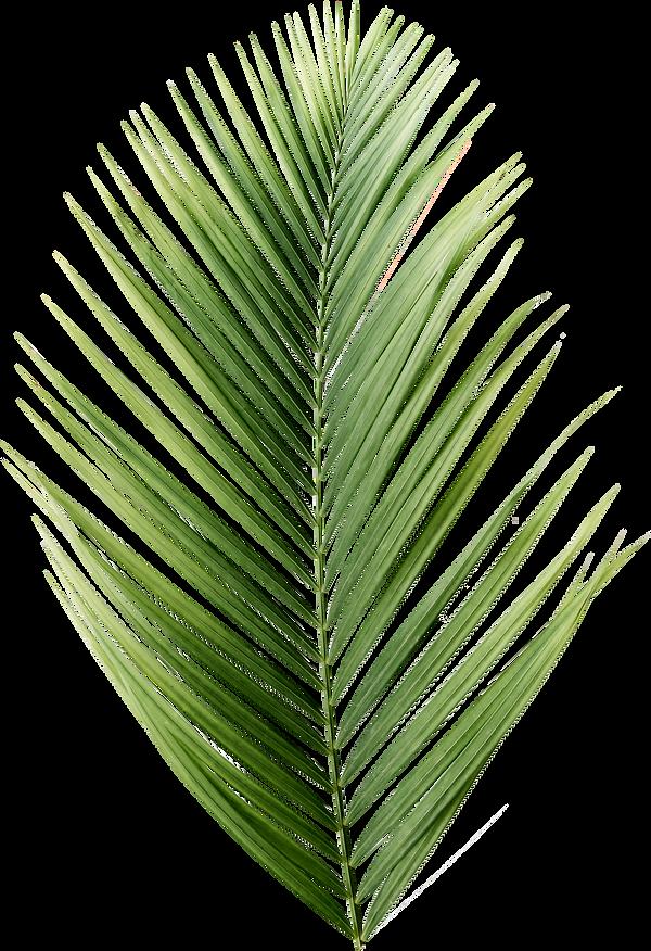 palmier-vert_edited.png