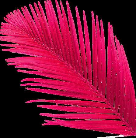 palmier-couleurs-tourne.png