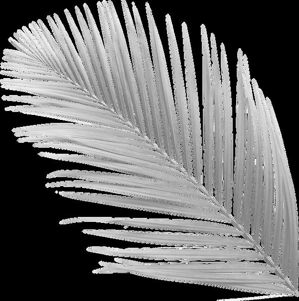 palmier-couleurs-gris-tourne.png