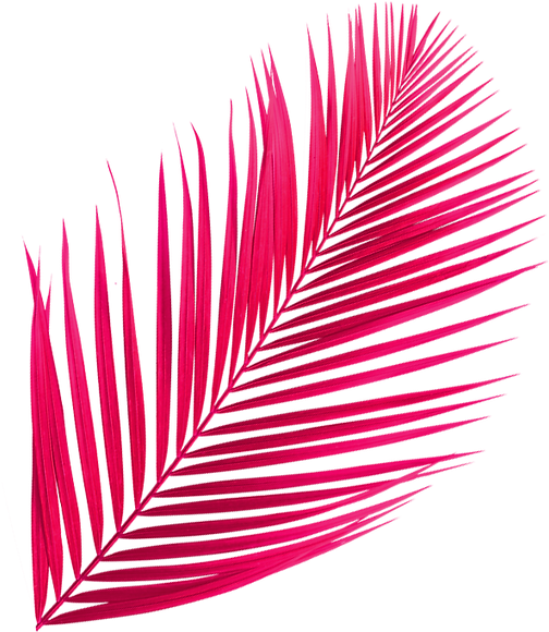 palmier-framboise-web-tourne_edited.png