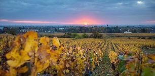 Maison-Champy-vignes-automne.JPG