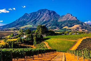 841559-vineyards-delaire-graff-estate-he