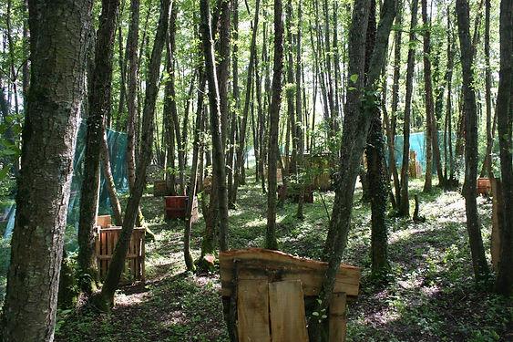 terrain-paintball-forêt-palissades-palettes