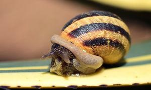snail-2234988_1920.jpg