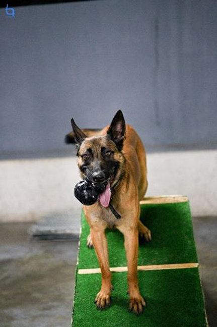 Kong Extreme- Brinquedo recheável resistente para cães Tam XL