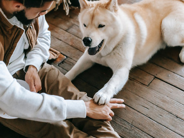 Five Ways Pets can Improve Your Mental Health