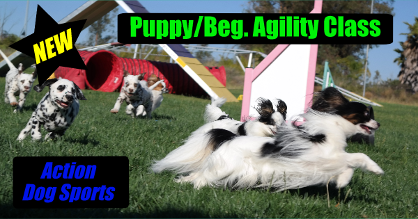 NEW Puppy/Beg. Agility Class