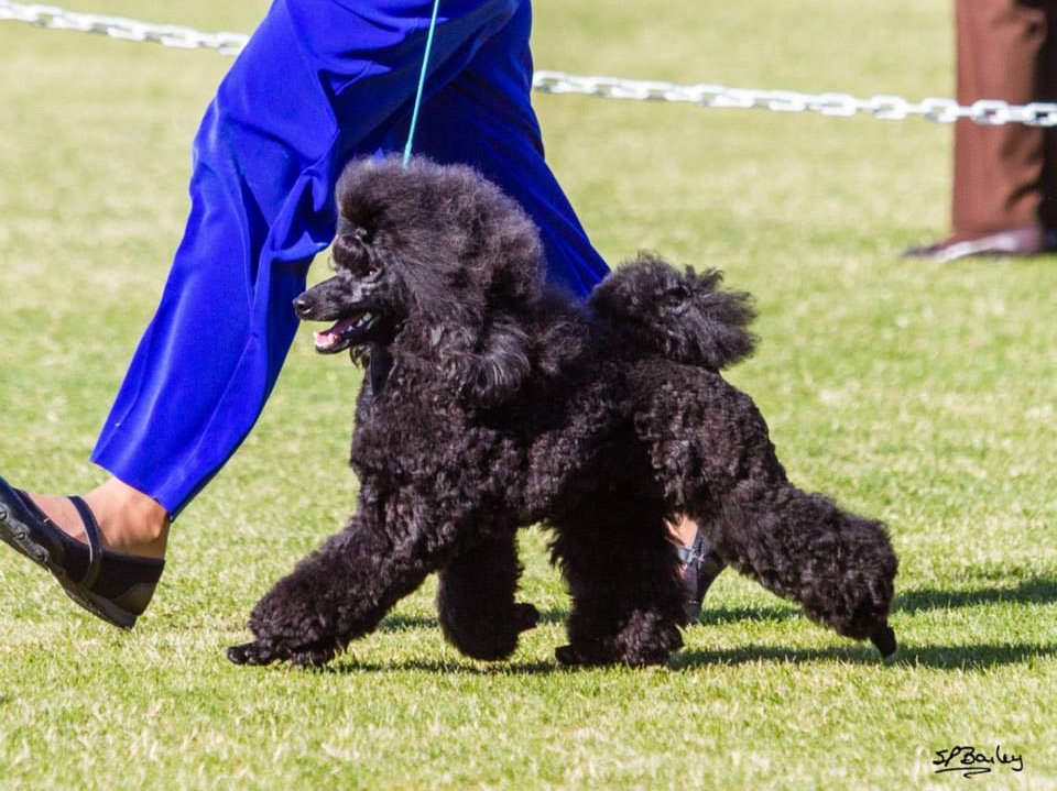 Conformation Handling Class | actiondogsports