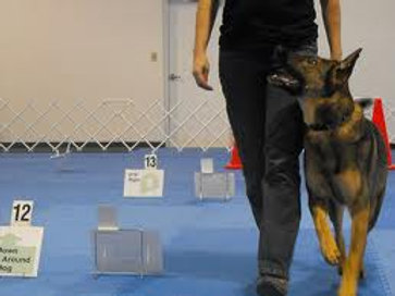 Rally Obedience Class