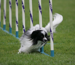 Advanced Weave Pole Classes