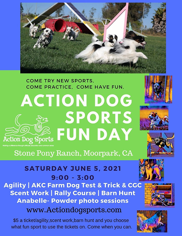 Action Dog Sports Fun Day (1).jpg