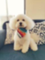 Dog Grooming Whangarei