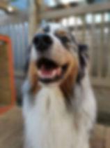 Dog Daycare Whangarei