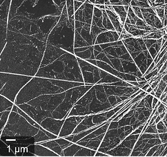Protein fibers, self-assembled proteins, conductive protein fibers