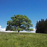 JanineBild.jpg