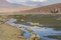 Vado Machuca - 4300 m.s.n.m.