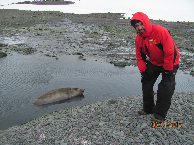 jota y foca Antartica