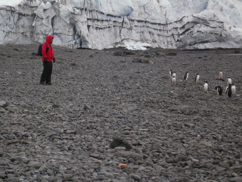 JMP pinguinos
