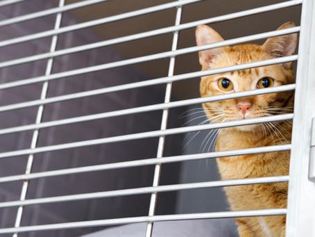 สัญญาณที่บอกว่าน้องหมาน้องแมวอาจป่วย