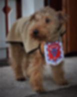 Kirppu-koira 1222018.JPG