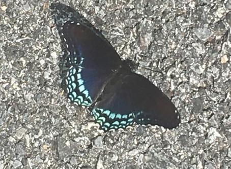 Butterflies as a Wink from Heaven