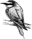 bee-eater-bird-doodle-hand-drawn-vector-