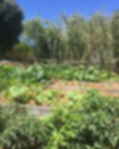 Raise bed veggie garden