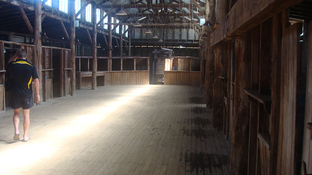 Inside the shearing shed