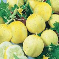 lemon cucumber.jpg