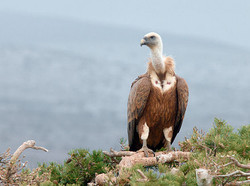 Observatorios de aves