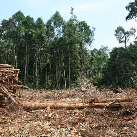 The Effects of Logging on Neotropical Forests