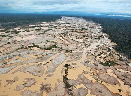 The Effects Of Deforestation In the Amazon