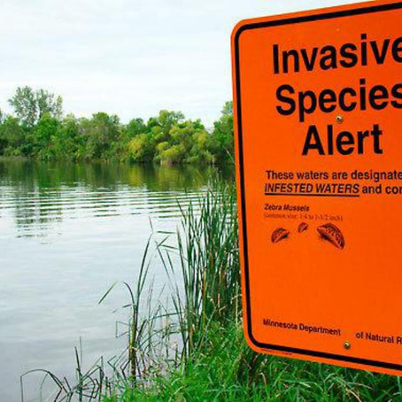 Earth Under Attack from Foreign Invaders: The Problem with Invasive Species