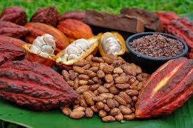 Conservation Effects and History of Cacao in the Tropics