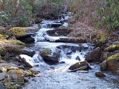 Bee Creek winter 2013-2014 (1).jpg