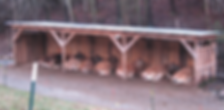 Yellow Branch Farm Herd.png