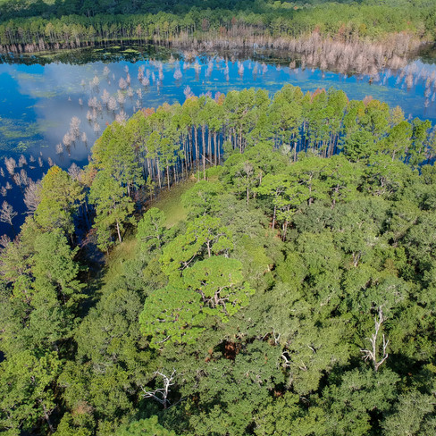 old Florida drone shot of forested point