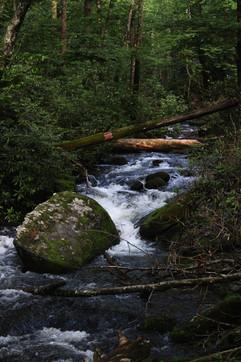Little Santeetlah Creek.jpg