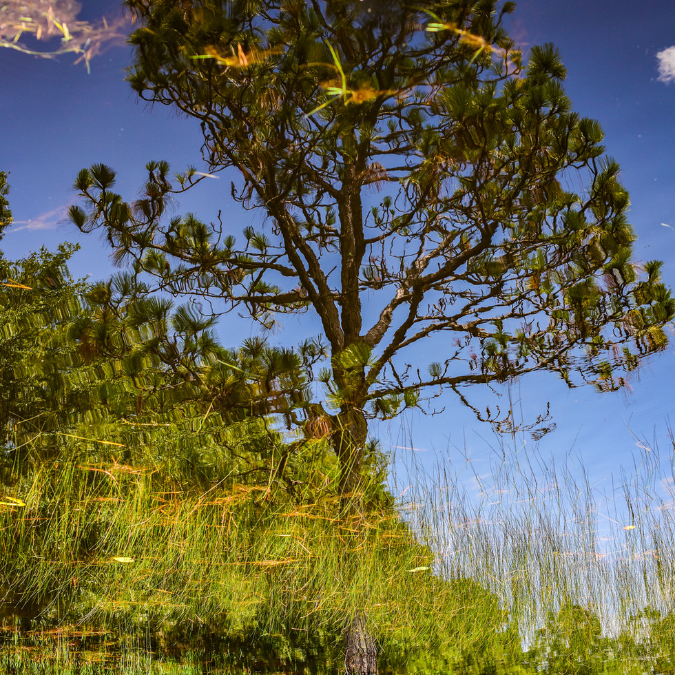 Pine Photo Old Florida Vibes.jpg