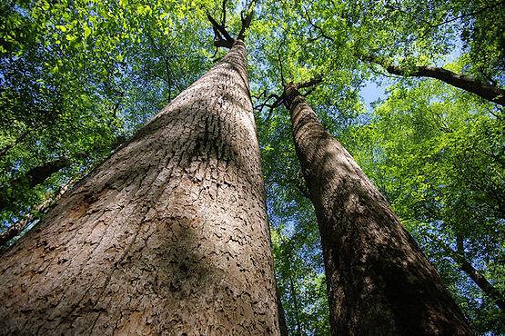 joyce_kilmer_forest.jpg