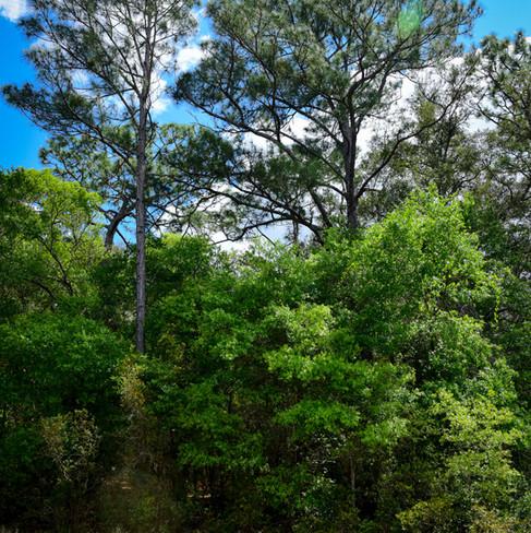 Old Florida edge habitat.jpg