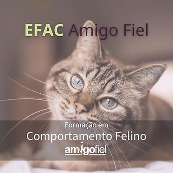 INSTAGRAM AMIGO FIEL - GATOS (1).png