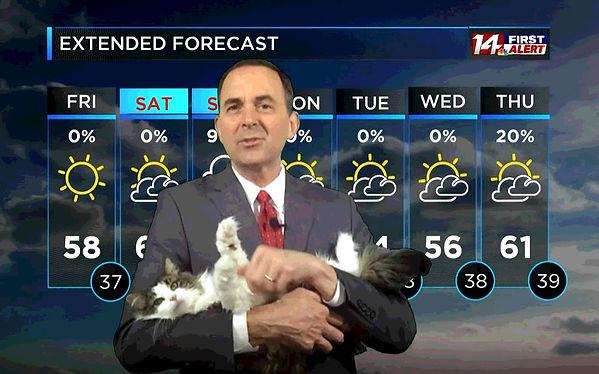 cat meteorologist.jpg