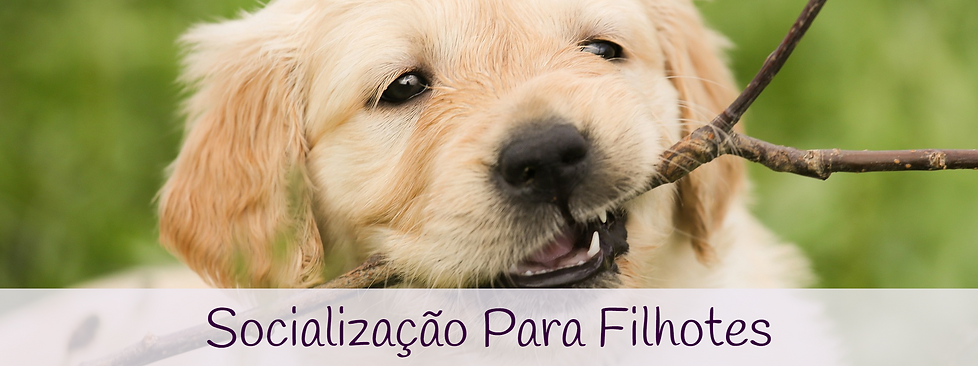 Socialização_para_filhotes.png