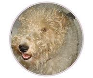 Depoimentos - Max Fox Terrier.jpg