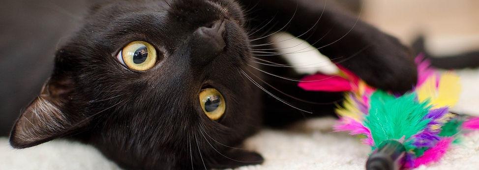 cat-3040345_1920.jpg