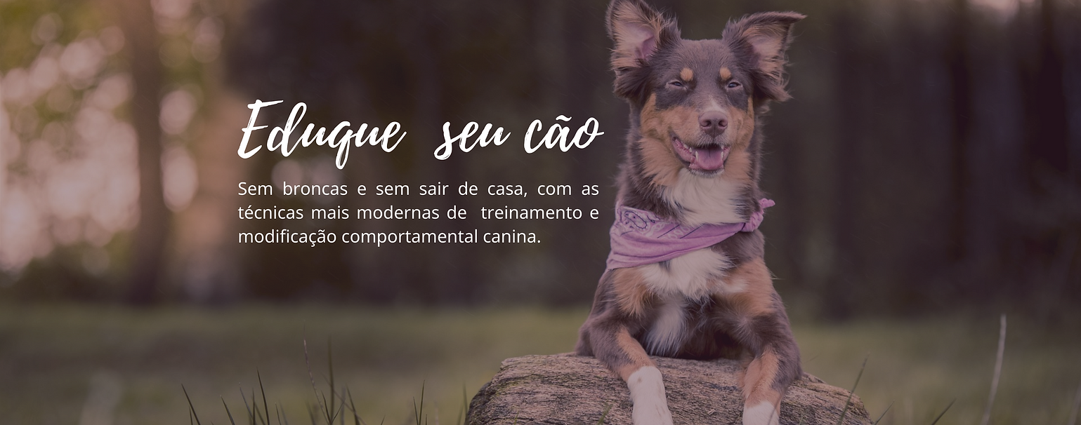 PÁGINA DE VENDAS CÃES.png